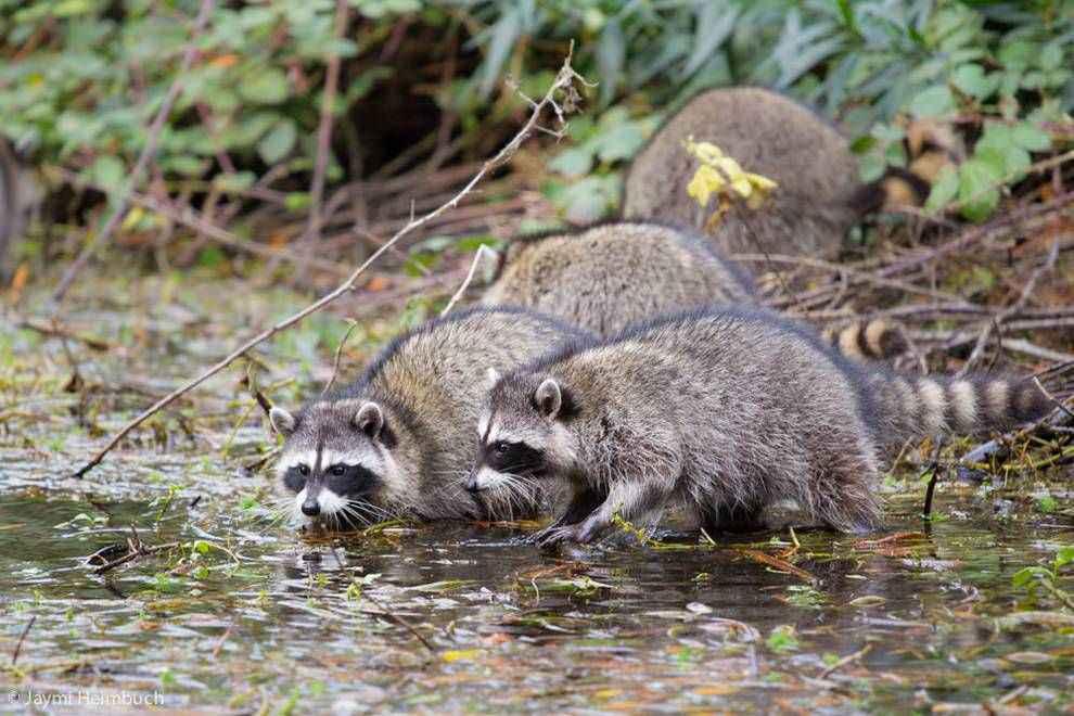 trovare l'acqua grazie agli animali
