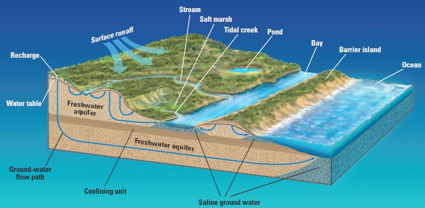 Come trovare l'acqua osservando territorio, piante e animali