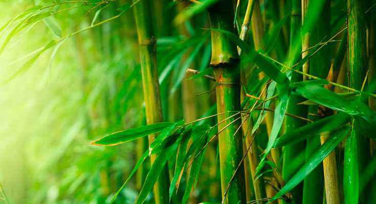 lame di bambù