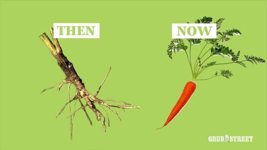 carota prima e dopo la domesticazione