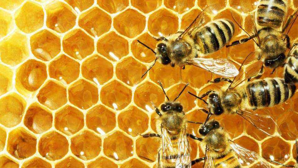 Cera d' api
