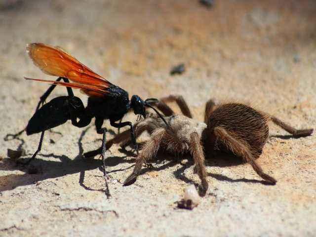 dolore punture di insetti