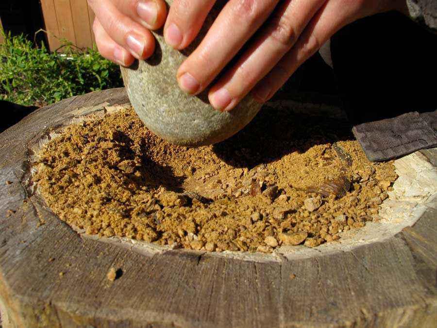 Macinatura delle ghiande per produrre farina