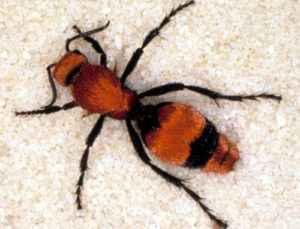 punture dolorose di insetti