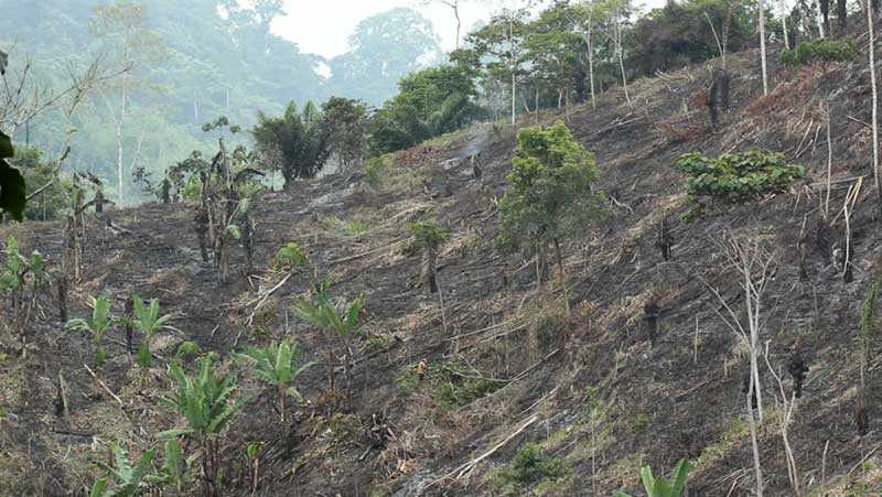 fuoco slash and burn