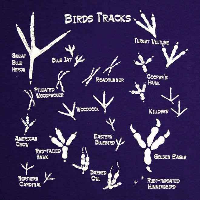 impronte uccelli
