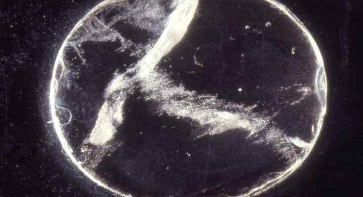 lente di Nimrud