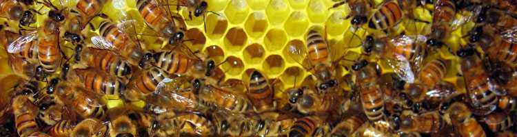 Miele: raccolta e produzione nell'antichità