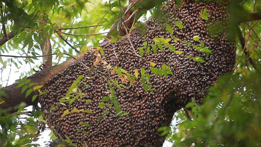 miele api selvatiche