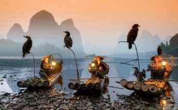 pesca con il cormorano