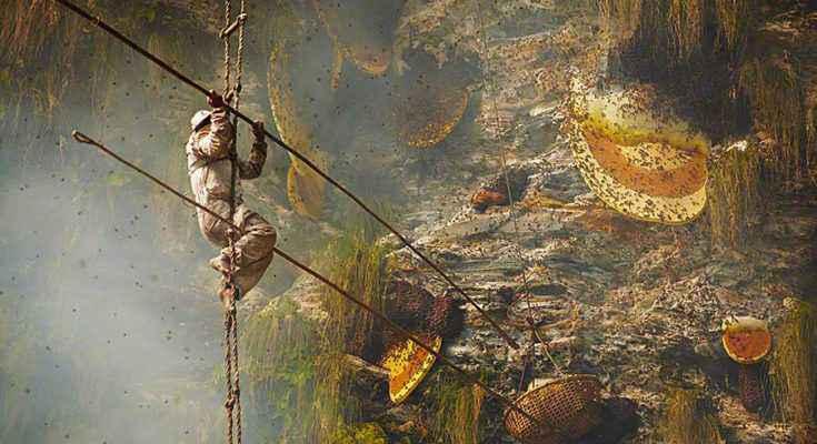 Cacciatori di miele allucinogeno