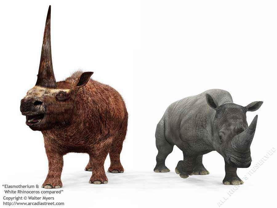 Elasmotherium paragonato ad un rinoceronte moderno