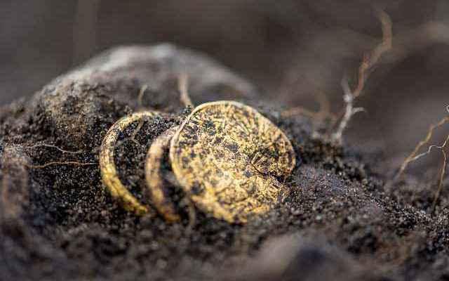 Monete e anelli d'oro