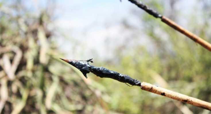 Frecce avvelenate