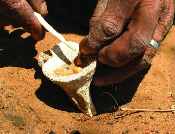 Preparazione del veleno per le frecce usate dai San