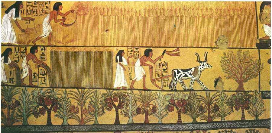 Agricolture e intelligenza