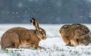 Sopravvivenza animali inverno