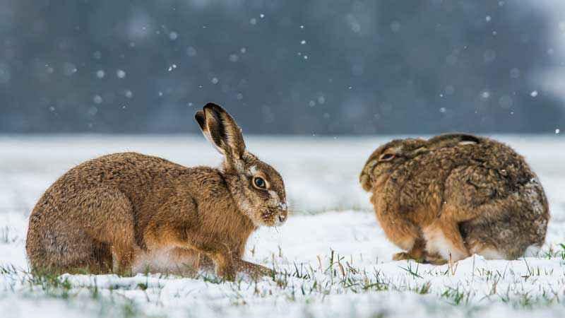Come si preparano all'inverno gli animali? – VitAntica