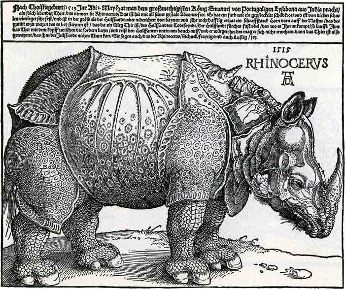 Rinoceronte indiano raffigurato da Dürer