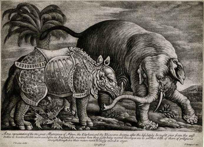 Rinoceronte e elefante