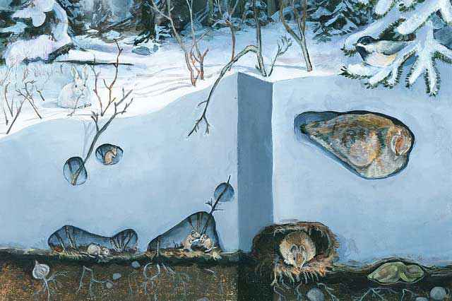 subnivium invernale