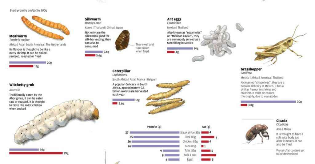 Valori nutrizionali di alcuni insetti