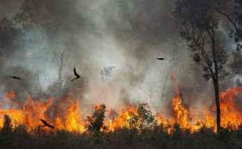Rapaci e incendi boschivi