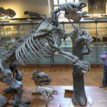 Caccia al bradipo gigante Megatherium