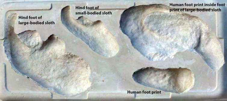 Tracce del bradipo gigante (Megatherium) e degli esseri umani che lo inseguivano