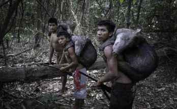 Durante la caccia tutti devono fare la loro parte, compresi questi ragazzini Awa di ritorno da una battuta di caccia terminata con successo. Foto di Domenico Pugliese