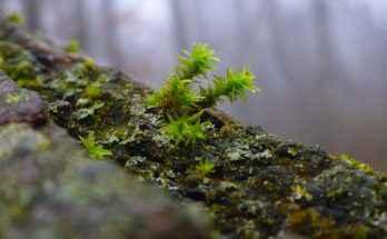 Ticino: raccolta fotografica di animali, piante e funghi