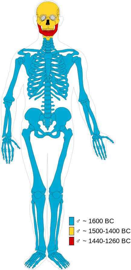 Composizione della mummia maschile di Cladh Hallan: in blu e rosso le ossa maschili, in giallo quelle femminili