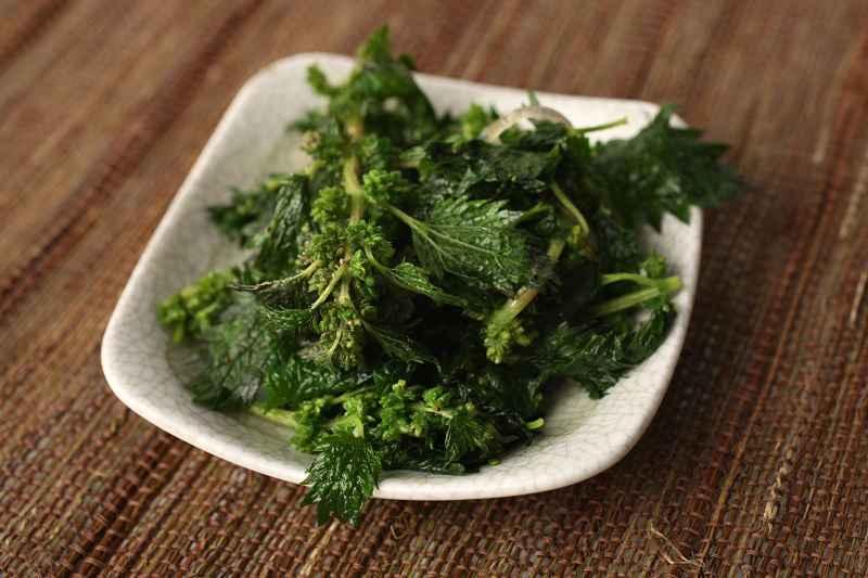 Ortica: medicina, cucina, ricette