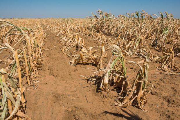 Agricoltura neolitica e insicurezza alimentare
