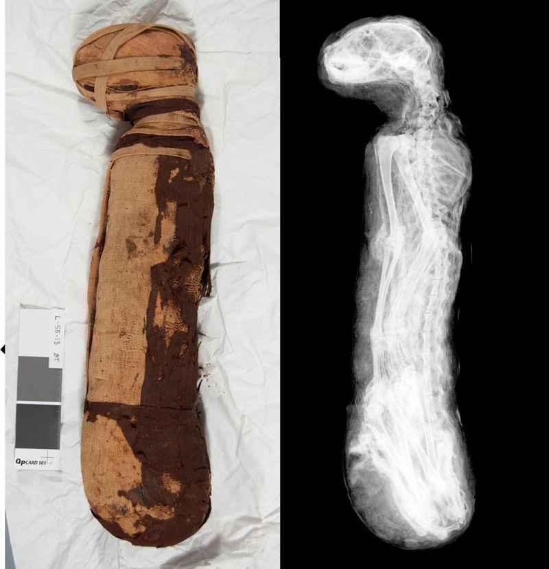 Mummia di gatto