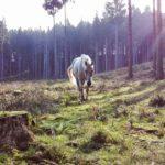 Il cavallo: storia, evoluzione e selezione. Foto di Erika Argo
