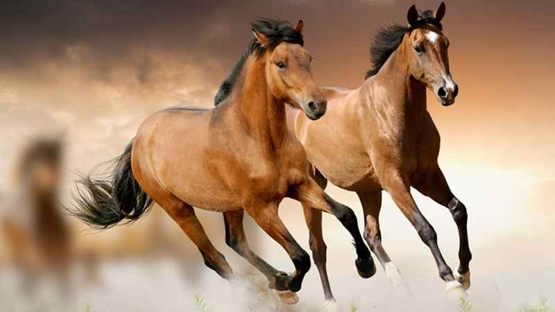 Il cavallo: storia, evoluzione e selezione. Mustang