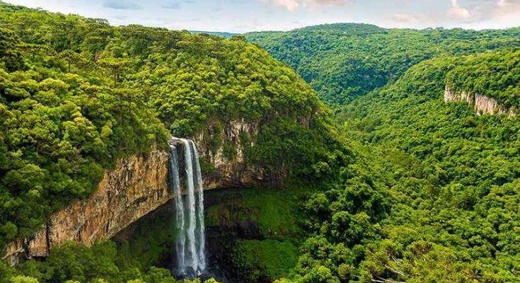 La foresta amazzonica è stata plasmata dall'essere umano?