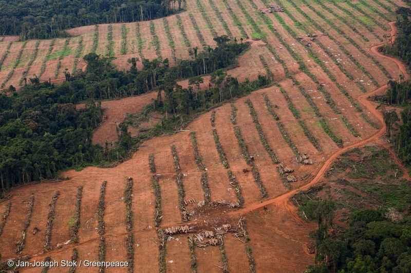Deforestazione per scopi agricoli