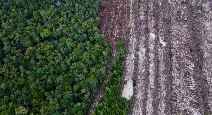 Quando iniziò la deforestazione europea?