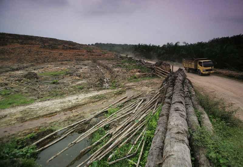 I Romani erano consapevoli del problema della deforestazione?