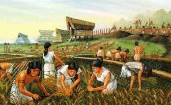 Perché è nata l'agricoltura?