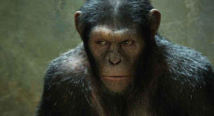 Quanto sono forti le grandi scimmie antropomorfe?