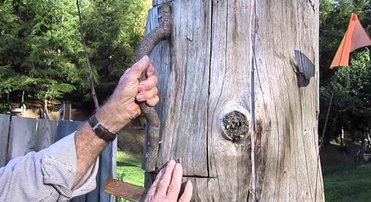 Arnia tradizionale di tronco