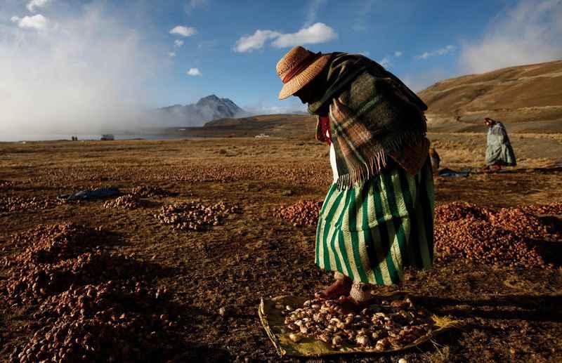 Preparazione tradizionale del chuño