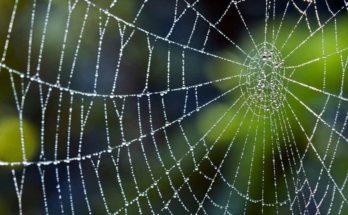 Tela di ragno, bendaggio naturale