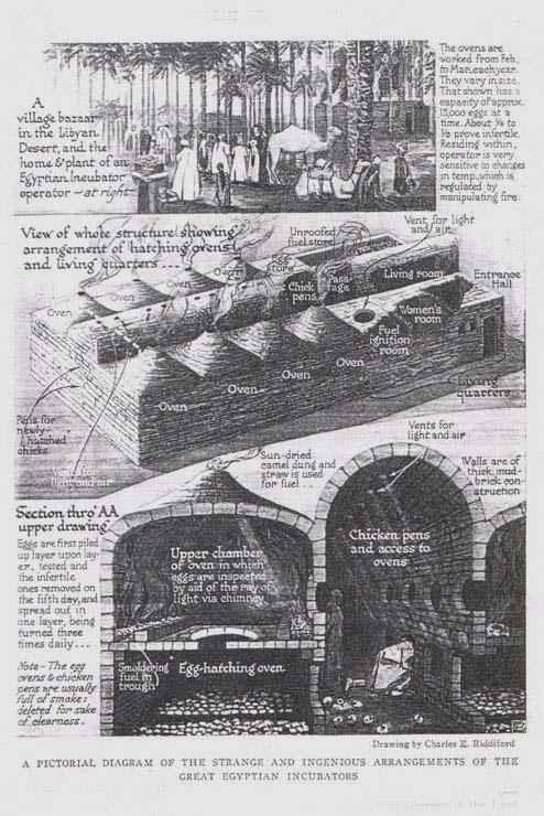 Descrizione del funzionamento di un'antica incubatrice per uova egiziana