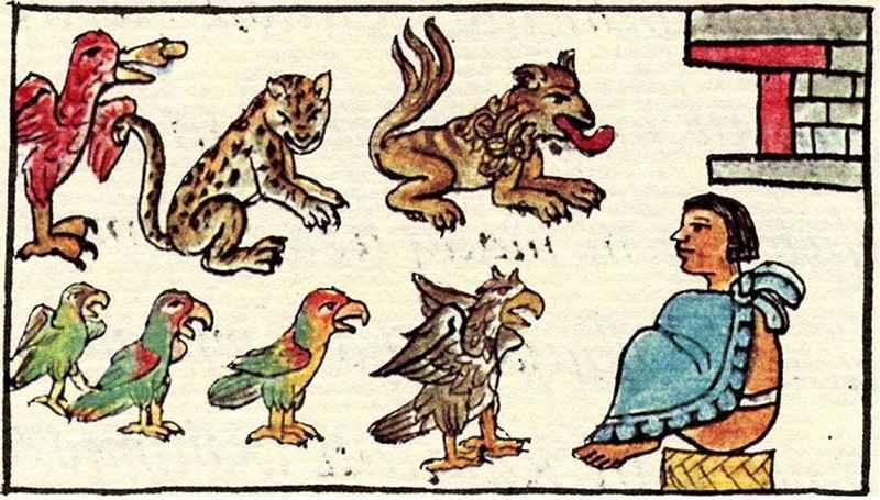 Alcuni animali presenti nello zoo di Montezuma, dal Codice Fiorentino, 1577