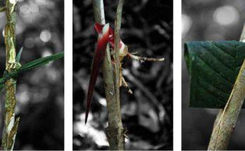 Oroo', il linguaggio della giungla malese