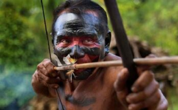 Veleni per frecce: caccia e guerra con tossine naturali